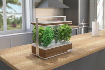 Basile, le jardin d'intérieur pour plantes aromatiques