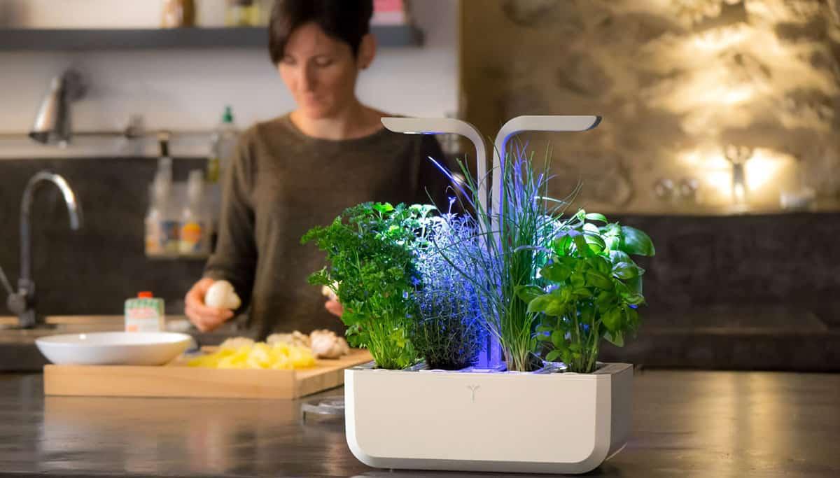 Le potager connecté dans votre cuisine avec Véritable