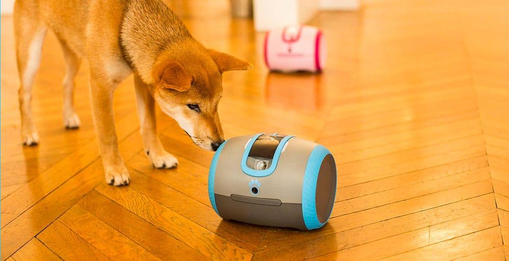 LaÏka, le compagnon connecté qui accompagnera votre chien pendant vos absences