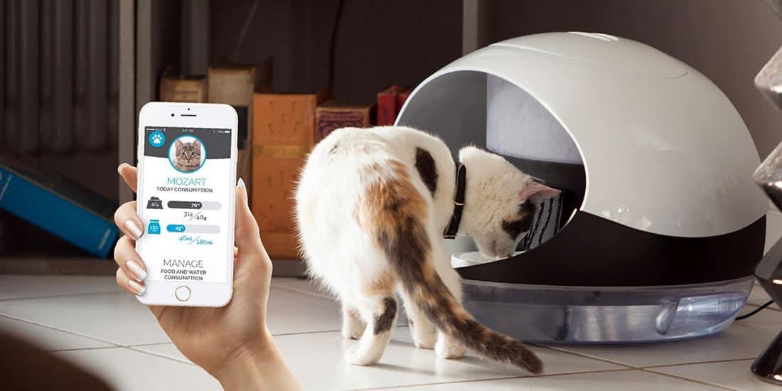 catspad le distributeur connect de croquettes pour chat. Black Bedroom Furniture Sets. Home Design Ideas