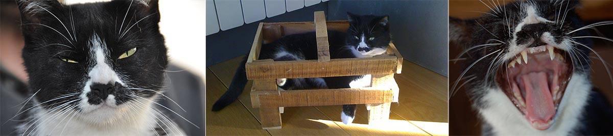 Mollie teste Weenect Cats 2