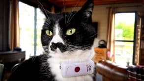 Test complet du collier GPS pour chat Weenect Cats 2