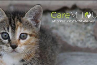 Caremitou, la litière e-santé pour chats