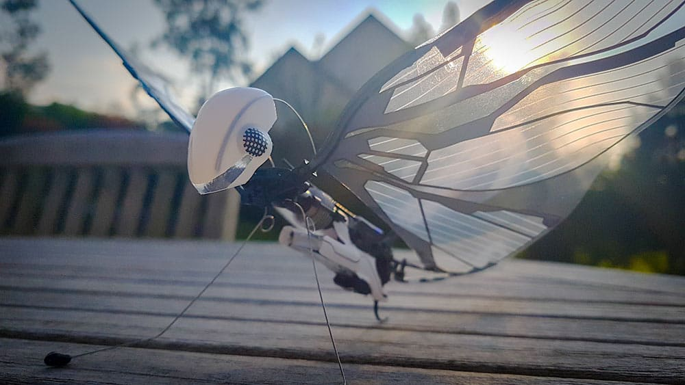 Test de l'oiseau biomimétique radiocommandé MetaFly