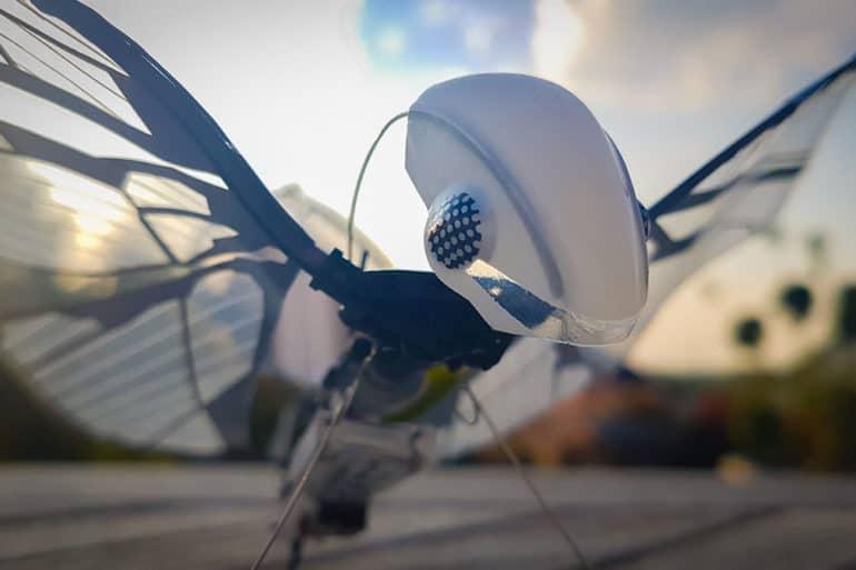 Test de l'oiseau biomimétique radiocommandé MetaFly